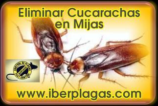 Eliminar cucarachas en Mijas
