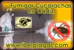 Fumigar cucarachas en Cádiz