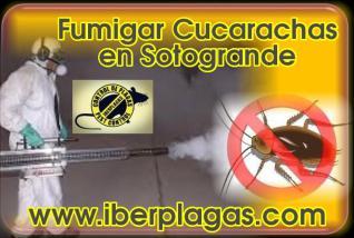 Fumigar cucarachas en Sotogrande