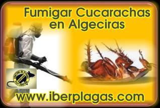 Fumigar cucarachas en Algeciras