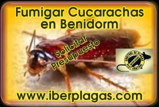 Fumigar cucarachas en Benidorm