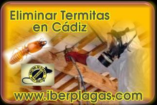 Eliminar Termitas en Cádiz