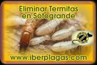Eliminar Termitas en Sotogrande