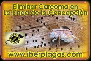 Eliminar Carcoma en La Línea de la Concepción