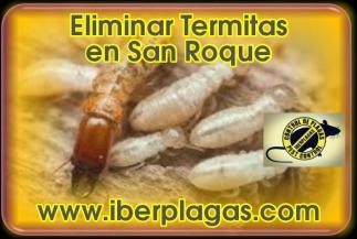 Eliminar termitas en San Roque