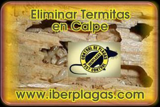 Eliminar termitas en Calpe