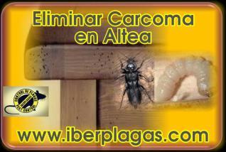 Eliminar Carcoma en Altea