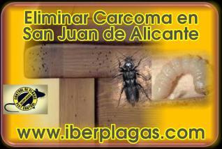 Eliminar Carcoma en San Juan de Alicante