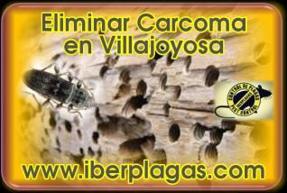 Eliminar Carcoma en Villajoyosa