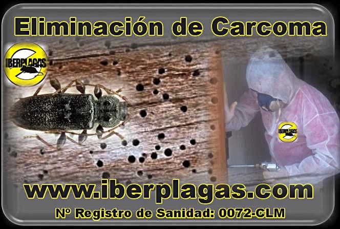 Iberplagas carcoma - Eliminar carcoma ...