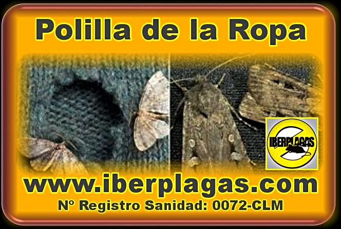 Iberplagas polillas - Como eliminar la polilla de la madera ...