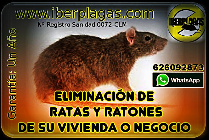 Eliminar Ratones En Casa. Interesting Beautiful Pis De Gato Remedios ...